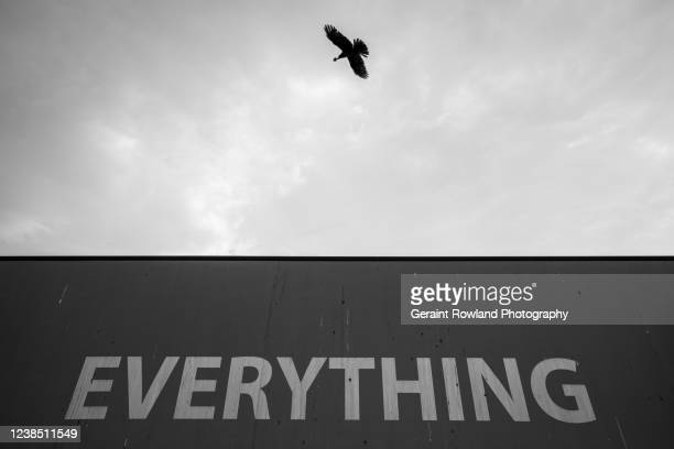 everything in black and white - everything must be sold stock pictures, royalty-free photos & images