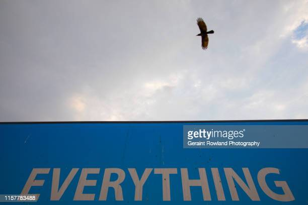 everything - everything must be sold stock pictures, royalty-free photos & images