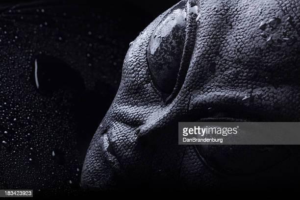 Evil Alien Face