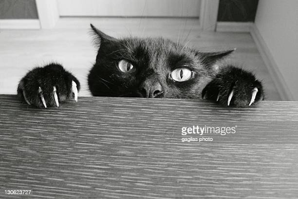 evil cat - evil stock photos and pictures