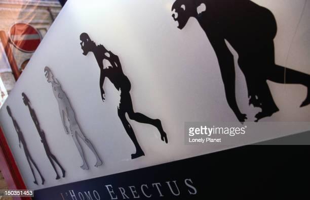 Evolution of man in pictures - Homo erectus.
