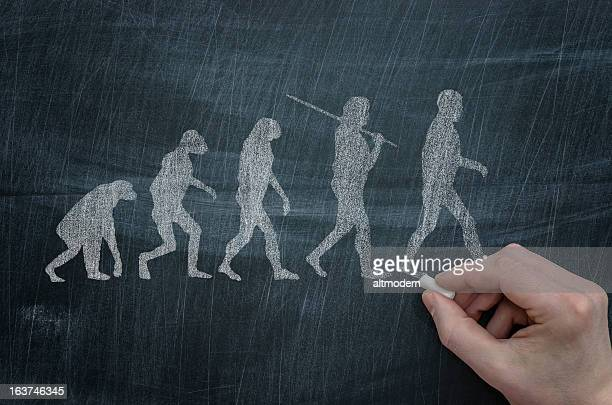 evolution - primate stock pictures, royalty-free photos & images