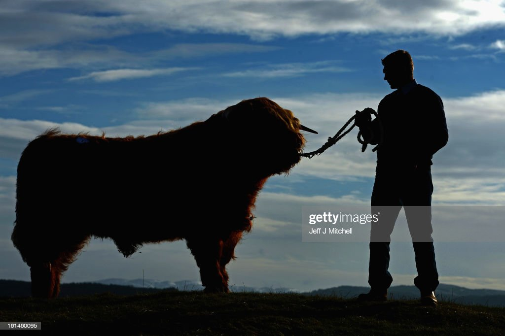 Ewan MacKay stands with 'Angus More of Glengoyne', which was sold at the 122nd Highland Cattle Society spring sale to a buyer from the United States for GBP Five Thousand on February 11, 2013 in Oban, Scotland. The show and sale is held over two days and is open to all highland breed enthusiasts, attracting many buyers from across Europe and North America.