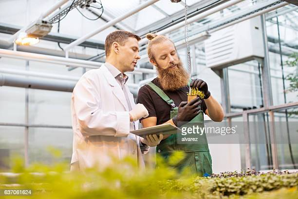 examining a plant for disease - factory farming stock pictures, royalty-free photos & images