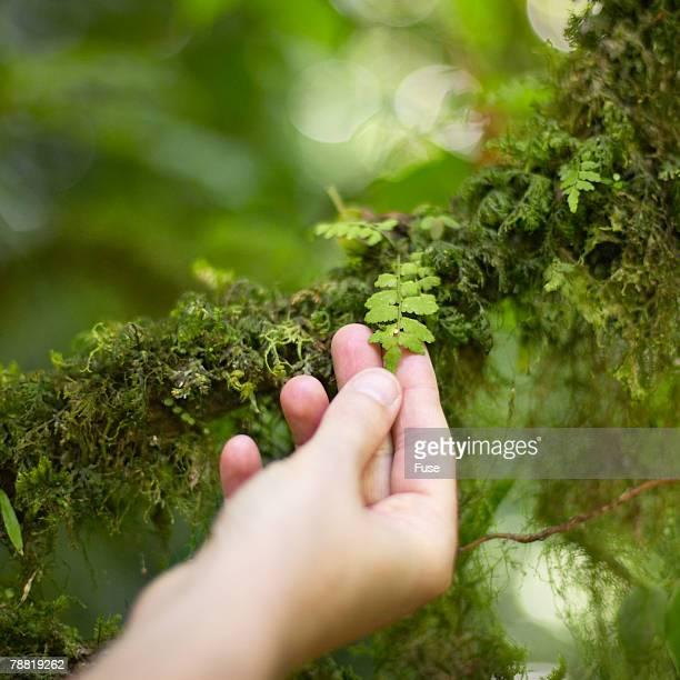 Examining a Plant