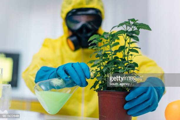 examining plant in laboratory - microbiologist stock pictures, royalty-free photos & images