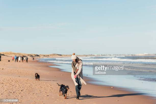 excited at the beach - pet toy stock pictures, royalty-free photos & images