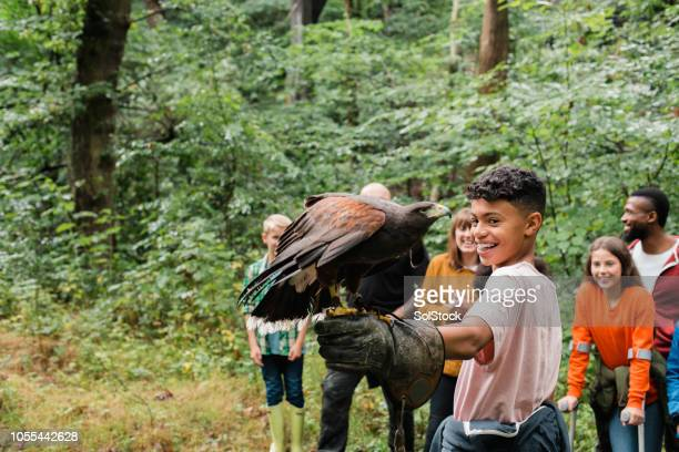 excited to experience something new - birds_of_prey stock pictures, royalty-free photos & images