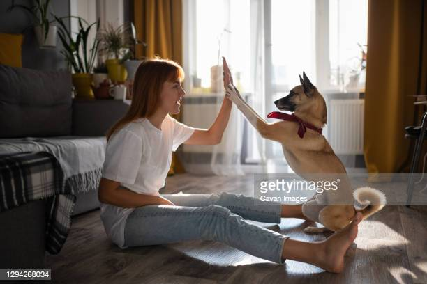 excited woman giving high five to dog - カザン市 ストックフォトと画像