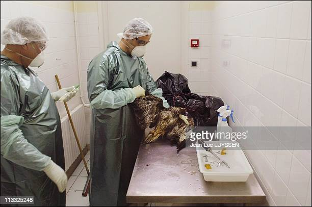 Exclusive Avian Flu Bird Tissue Is Analyzed At The Laboratoire Departemental D' Analyses De L' Ain On March 6Th 2006 In Bourg En Bresse France Here...