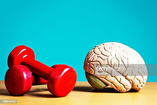 Exercise keeps body and mind fit: model brain with barbells