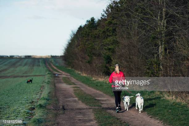 exercising the dogs - cumbria stock pictures, royalty-free photos & images