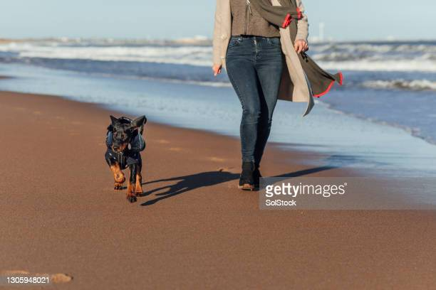 exercising together - pet clothing stock pictures, royalty-free photos & images