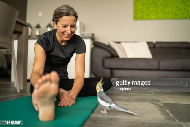 exercising woman at home smiling at her cockatiel - domestic animals stock pictures, royalty-free photos & images