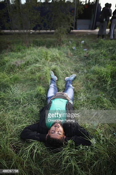 Exhausted syrians sleep next to a sunflower field before being taken by police by bus to board a train to the austrian border on September 15 2015 in...
