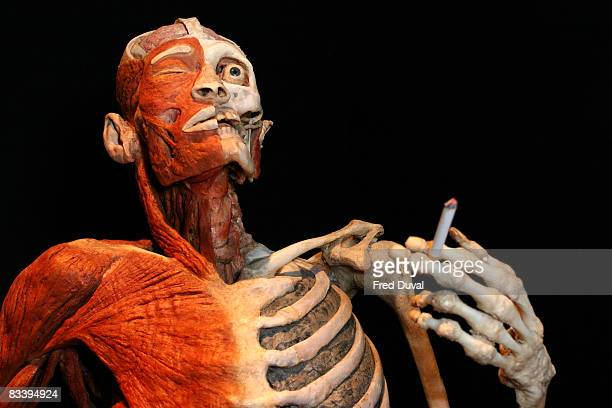 Exhibit at the Body Worlds & The Mirror of Time exhibition at the 02 on October 24, 2008 in London, England.