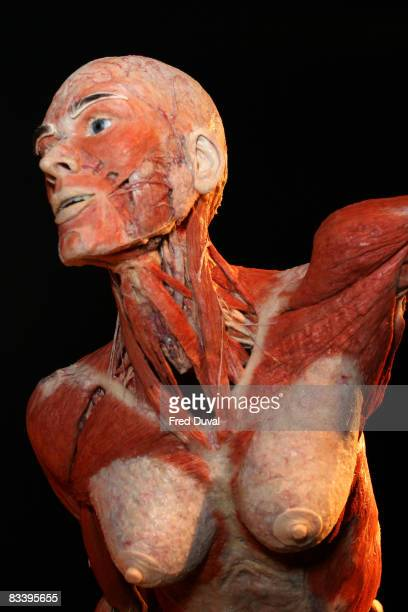 Exhibit at the Body Worlds The Mirror of Time exhibition at the O2 on October 24 2008 in London England