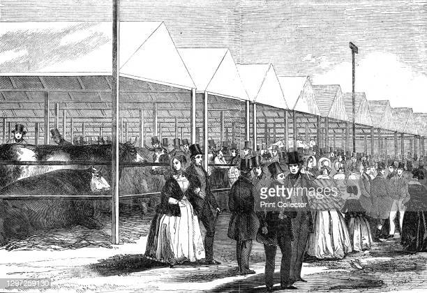 """Exhibition of cattle at the meeting of the Royal Agricultural Society at Southampton, 1844. From """"Pictorial Times"""", July 1844. Artist Unknown."""