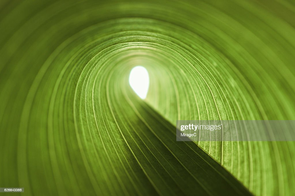 Exit of Green Leaf Tunnel : Stock Photo