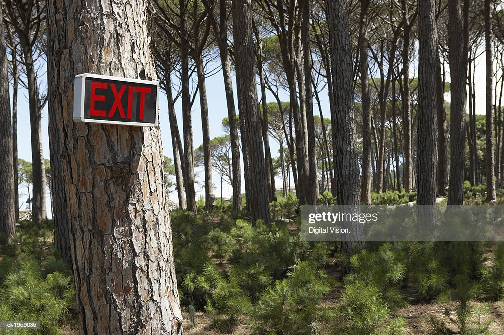 Exit Sign on a Tree Trunk in a Forest : Stock Photo