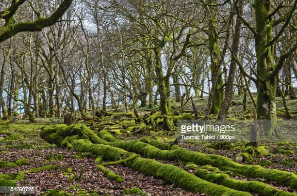 exmoor green - forest floor stock photos and pictures