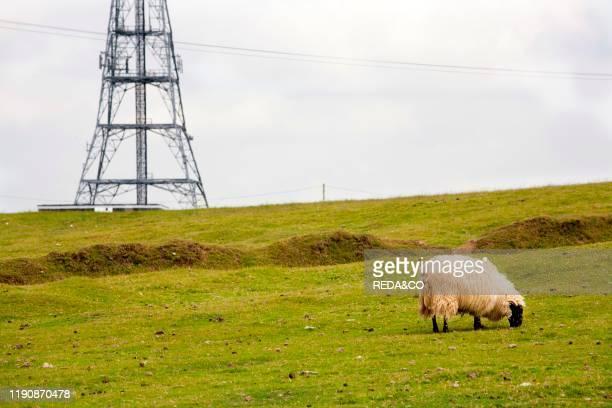 Exmoor National Park. Cornwall. England. Great Britain.