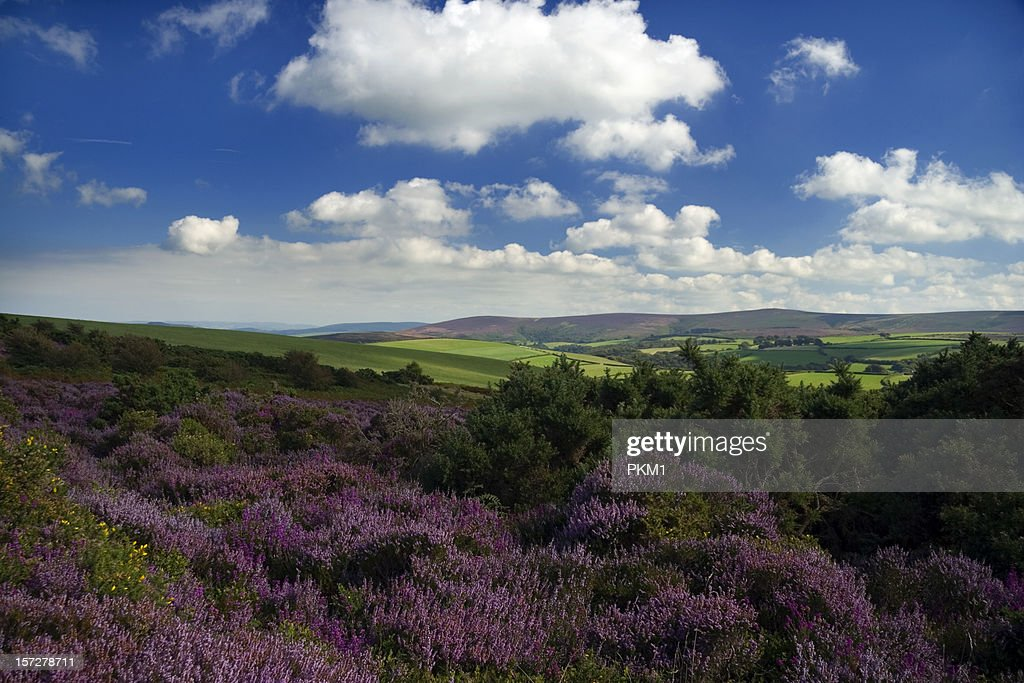Exmoor National Park : Stock Photo