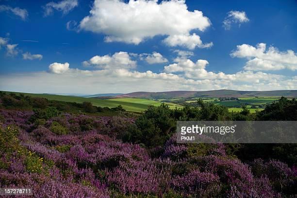 exmoor national park - exmoor national park 個照片及圖片檔