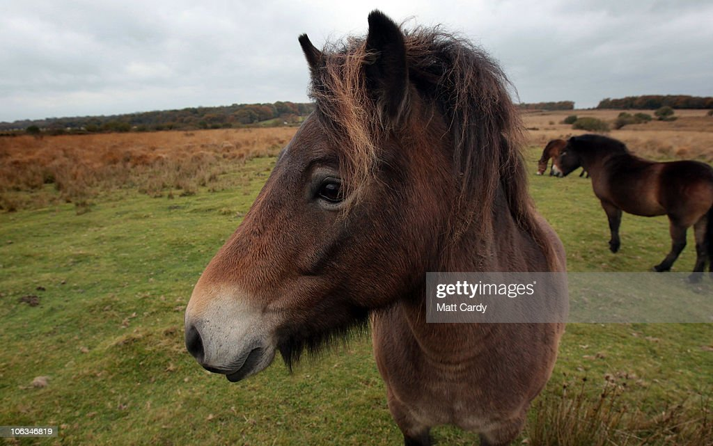 Exmoor Rocked By Killing Of Their Famous Stag : News Photo