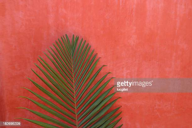 arrière-plan exotique - maroc photos et images de collection