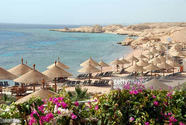 exotic beach with parasols and bougainvillea , sharm el-sheikh, egypt - egypt stock pictures, royalty-free photos & images