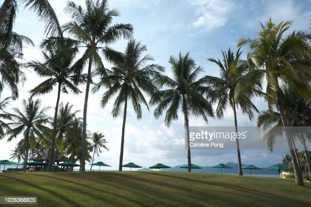 Exotic getaway on a tropical beach resort surrounded by coconut trees, blue sea and islands.