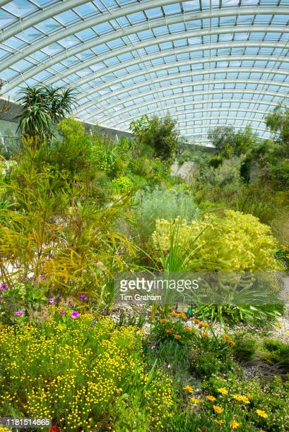 Exotic plants among horticultural exhibits within The Great Glasshouse of the National Botanic Garden of Wales in Carmarthenshire United Kingdom