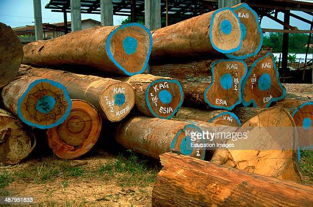 Exotic species of hardwood timber harvested from Ghana's rain forests, at a sawmill in Kumasi, the capitol of the Ashanti Region in Ghana, West...