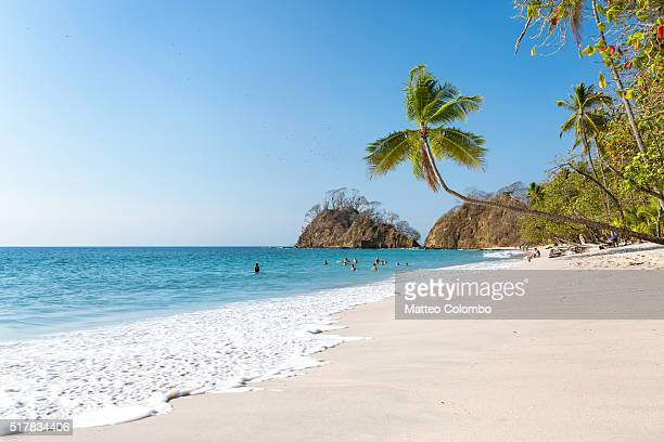 Exotic tropical beach with palm tree, Puntarenas, Costa Rica