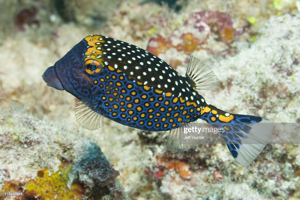 Exotic tropical fish on coral reef stock photo getty images for Exotic tropical fish