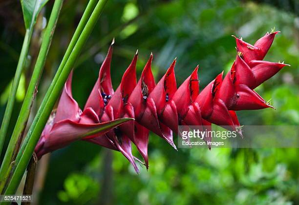Exotic Tropical Plants Bloom At The Botanical Garden Ubud Bali Indonesia