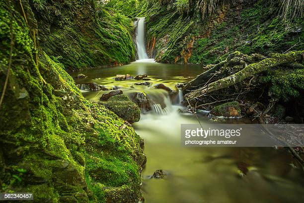 exotique - ardennes department france stock photos and pictures