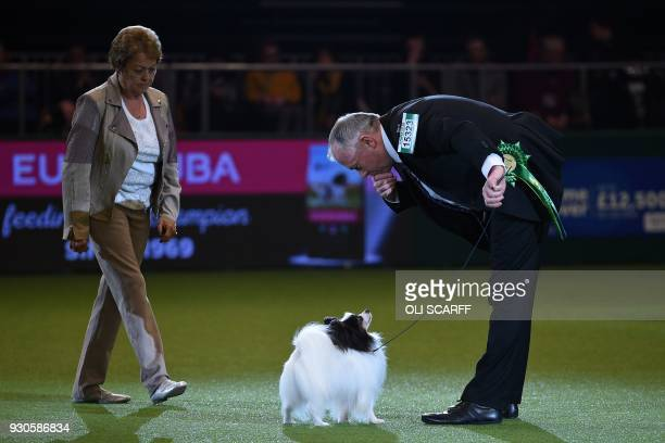 Expana's Sea Dragon Conqueror the Papillon is judged during the Best in Show competition on the final day of the Crufts dog show at the National...
