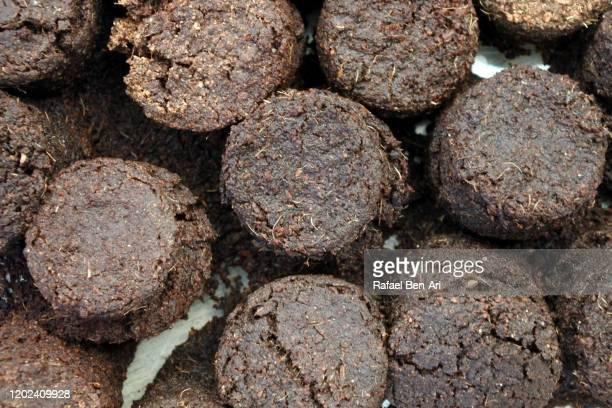 expanding seed starting soil disks. - rafael ben ari foto e immagini stock