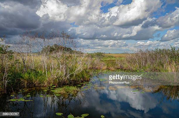 expansive view in the everglades - everglades national park stock pictures, royalty-free photos & images