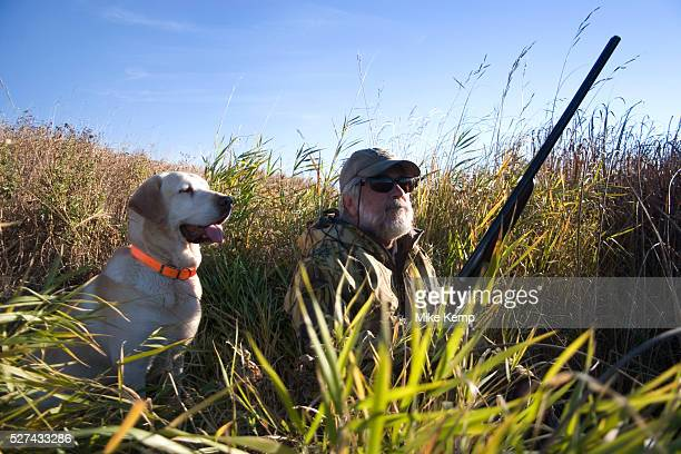 Experienced hunter John Davidson in North Dakota west of Minot duck hunting with his faithful labrador retriever Chester They wait patiently as ducks...