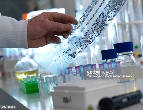DNA experiment