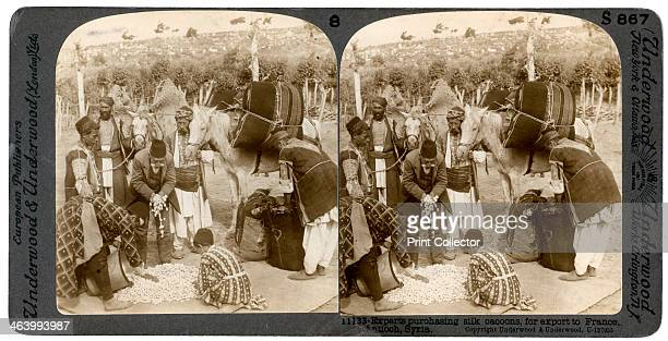 Experts purchasing silk cocoons for export to France Antioch Syria 1900s Stereoscopic slide