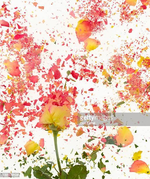 Exploding Flower
