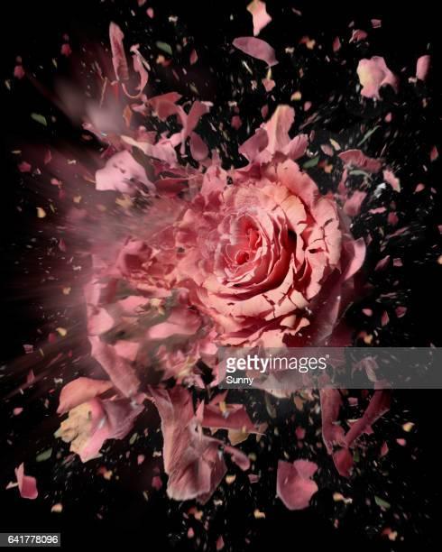 exploding flowers - folgen bewegungsaktivität stock-fotos und bilder
