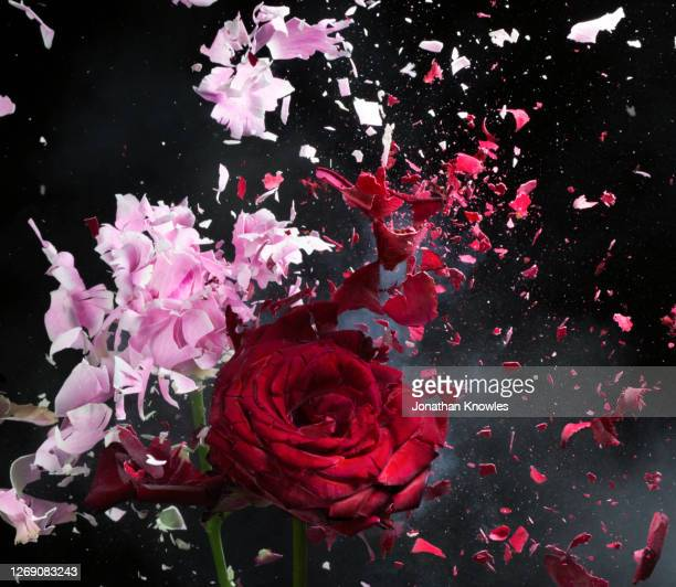 exploding red and pink flowers - exploding stock pictures, royalty-free photos & images