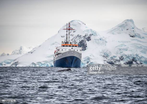 exploration boat and a whale in antarctica - 南極大陸探検 ストックフォトと画像