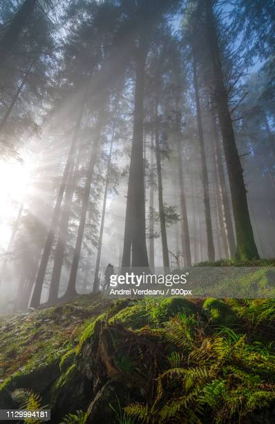 explorer of the woodland realm - nikko city stock pictures, royalty-free photos & images