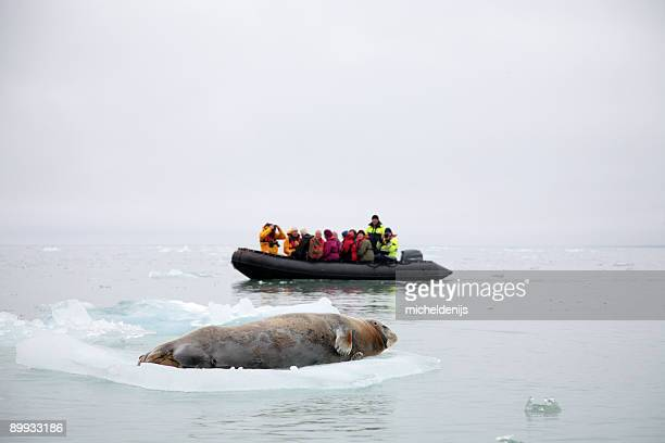Explorers in the Arctic encountering a whale